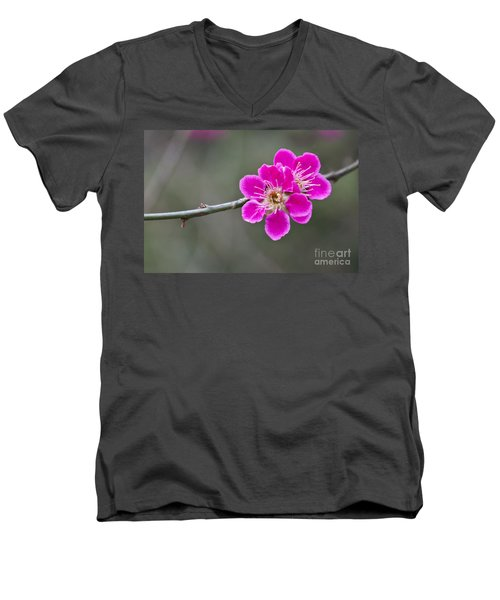 Men's V-Neck T-Shirt featuring the photograph Japanese Flowering Apricot. by Clare Bambers