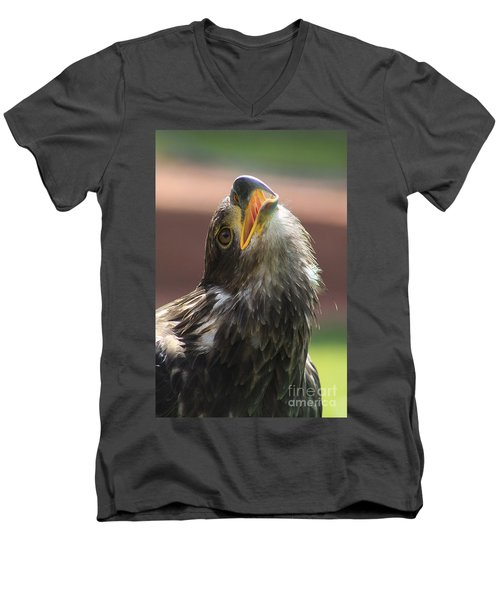 Men's V-Neck T-Shirt featuring the photograph Juvenile Bald Eagle by Alyce Taylor