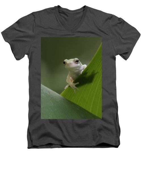 Men's V-Neck T-Shirt featuring the photograph Juvenile Grey Treefrog by Daniel Reed