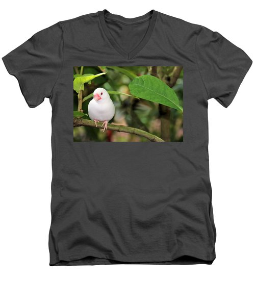 Men's V-Neck T-Shirt featuring the photograph Little White Bird by Rosalie Scanlon