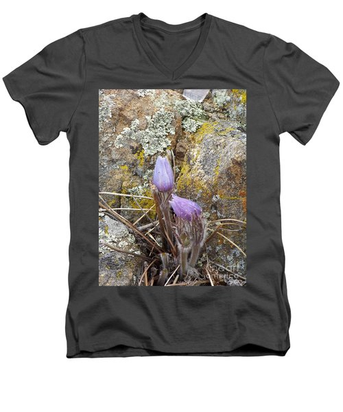 Pasque Flowers Men's V-Neck T-Shirt