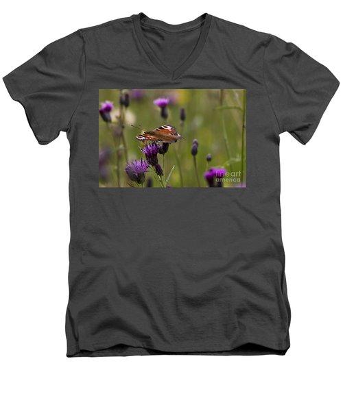 Peacock Butterfly On Knapweed Men's V-Neck T-Shirt