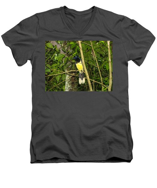 Men's V-Neck T-Shirt featuring the photograph Plush-crested Jay by David Gleeson