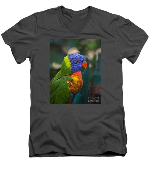 Posing Rainbow Lorikeet. Men's V-Neck T-Shirt