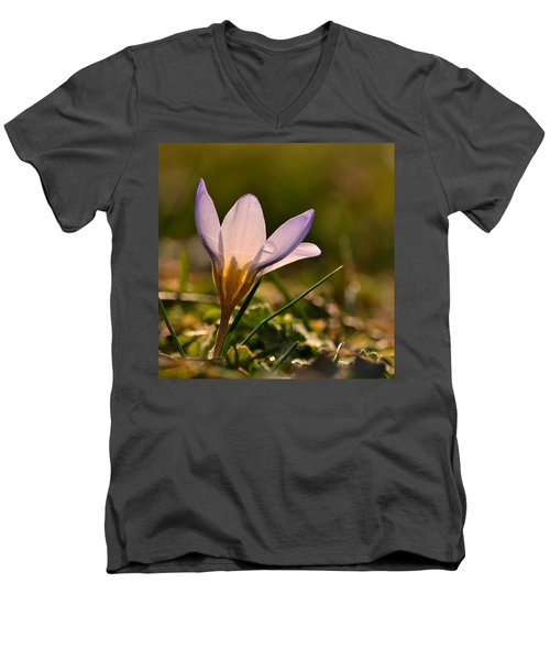 Purple Crocus Men's V-Neck T-Shirt