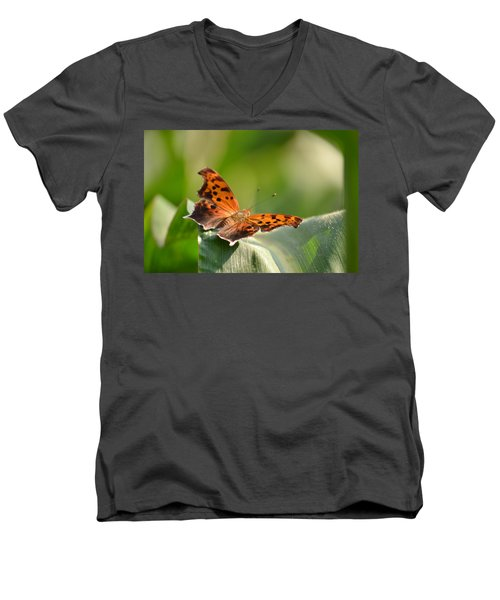 Men's V-Neck T-Shirt featuring the photograph Question Mark Butterfly by JD Grimes