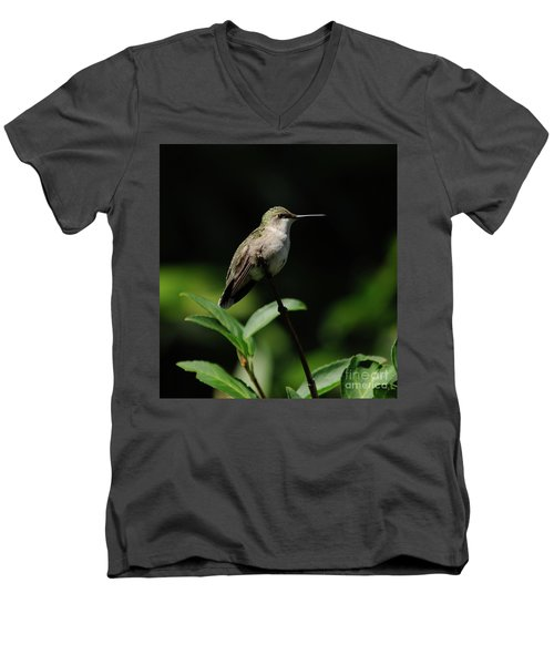 Ruby-throated Hummingbird Female Men's V-Neck T-Shirt