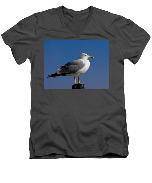 Men's V-Neck T-Shirt featuring the photograph Seagull by David Gleeson