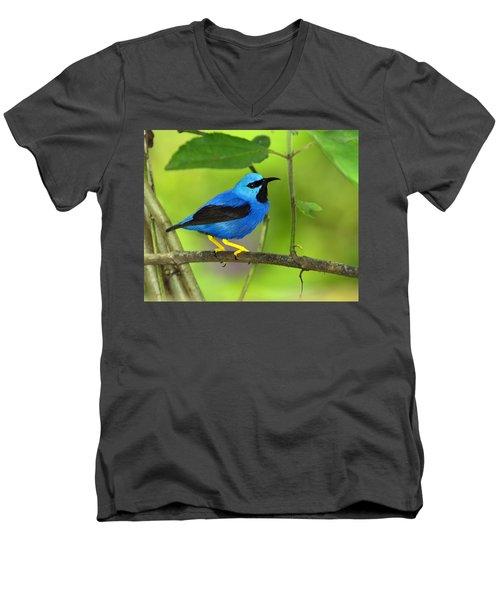 Shining Honeycreeper Men's V-Neck T-Shirt