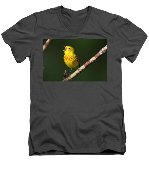 Singing Yellow Warbler Men's V-Neck T-Shirt