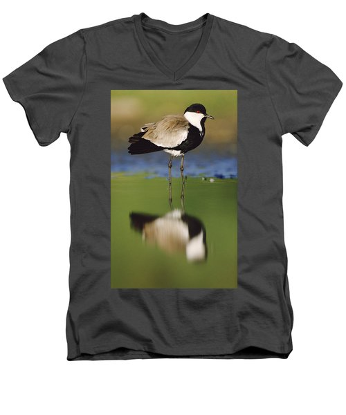 Spur Winged Plover With Its Reflection Men's V-Neck T-Shirt by Tim Fitzharris