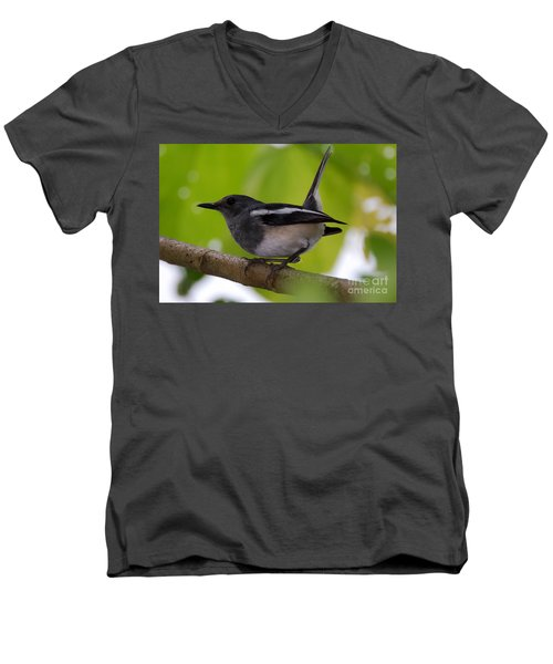 Men's V-Neck T-Shirt featuring the photograph Study Of A Magpie-robin by Fotosas Photography