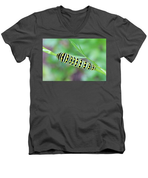 Swallowtail Caterpillar On Parsley Men's V-Neck T-Shirt