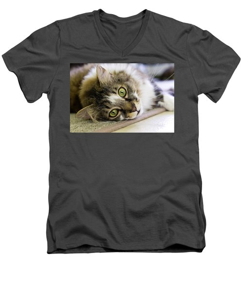 Tabby Cat Looking At Camera Men's V-Neck T-Shirt