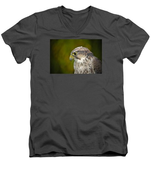 Thoughtful Kestrel Men's V-Neck T-Shirt