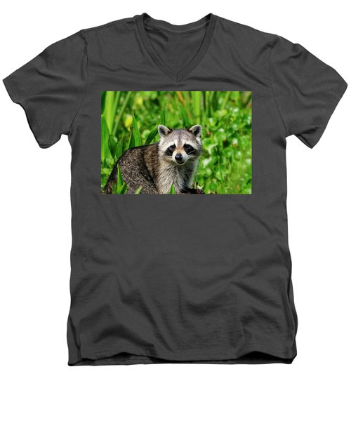 Wetlands Racoon Bandit Men's V-Neck T-Shirt