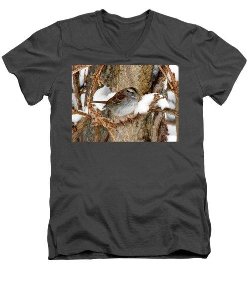 White Throat Men's V-Neck T-Shirt