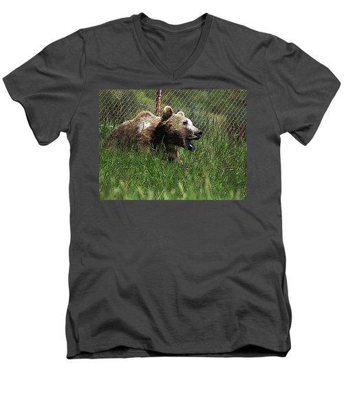 Wild Life Safari Bear Men's V-Neck T-Shirt
