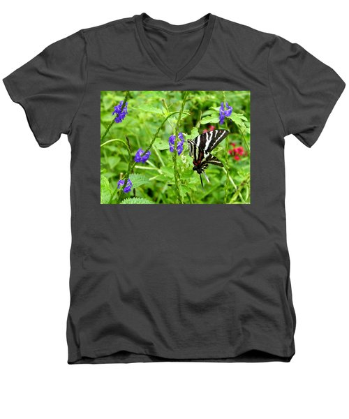 Zebra Swallowtail On Blue Porterweed Men's V-Neck T-Shirt by Judy Wanamaker
