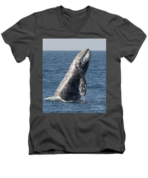 Breaching Gray Whale In Dana Point Men's V-Neck T-Shirt by Loriannah Hespe