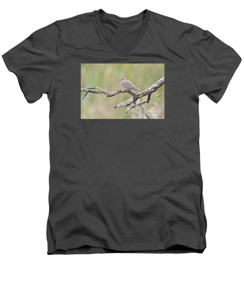 Early Mourning Dove Men's V-Neck T-Shirt by Kathy Gibbons