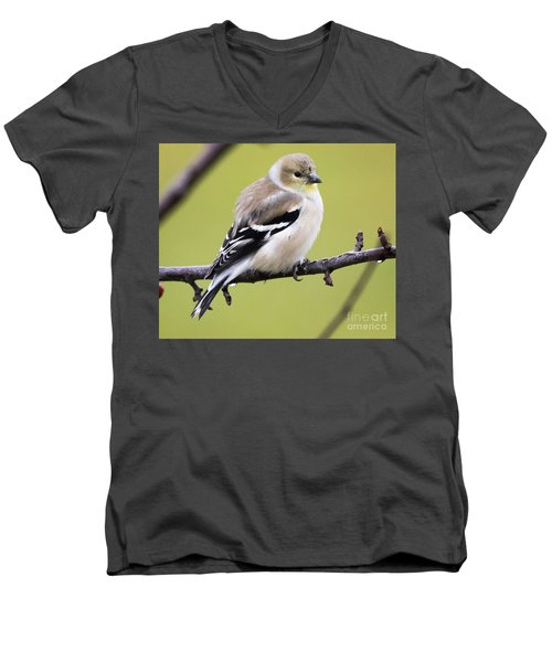 American Goldfinch Men's V-Neck T-Shirt