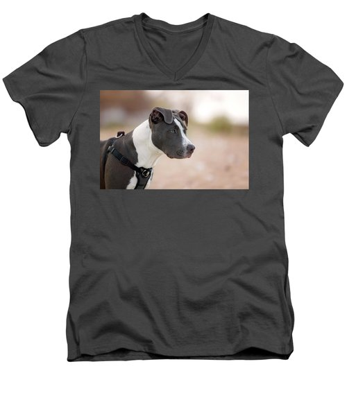 Men's V-Neck T-Shirt featuring the photograph American Pitbull Terrier by Peter Lakomy
