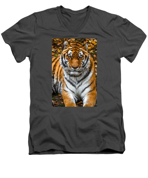 Amur Tiger  Men's V-Neck T-Shirt