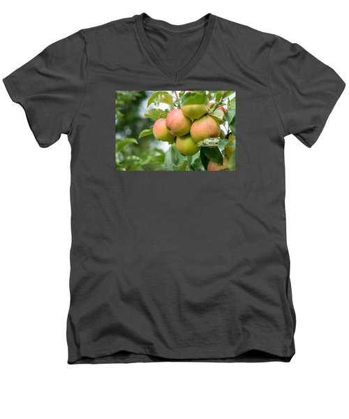 Apple Harvest Men's V-Neck T-Shirt by Sabine Edrissi