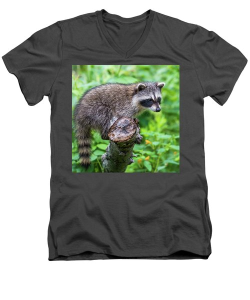 Men's V-Neck T-Shirt featuring the photograph Baby Racoon by Paul Freidlund