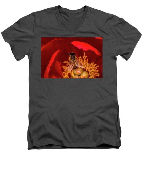 Bee Men's V-Neck T-Shirt by Jay Stockhaus
