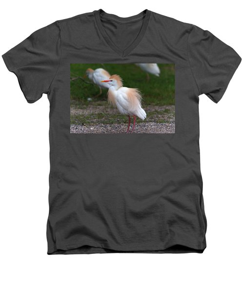 Cattle Egret Walking Close Men's V-Neck T-Shirt