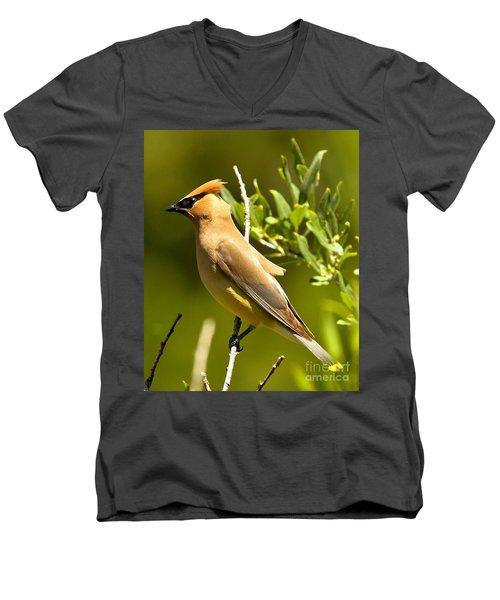 Cedar Waxwing Closeup Men's V-Neck T-Shirt by Adam Jewell