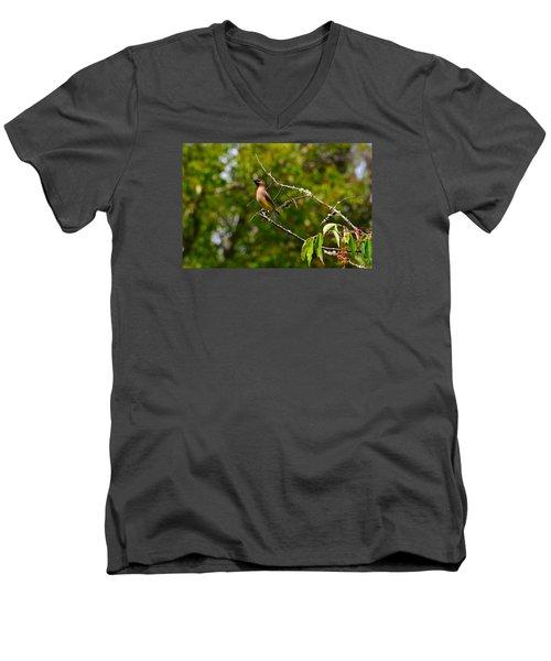 Cedar Waxwing Men's V-Neck T-Shirt by Dan Hefle