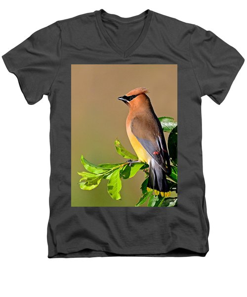 Men's V-Neck T-Shirt featuring the photograph Cedar Waxwing by Rodney Campbell