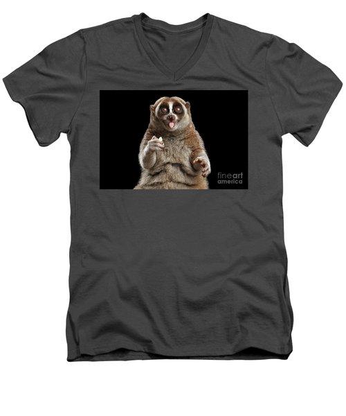 Close-up Lemur Slow Loris Isolated Black Background Men's V-Neck T-Shirt