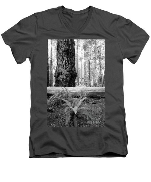 Men's V-Neck T-Shirt featuring the photograph Coastal Redwoods  by Vincent Bonafede