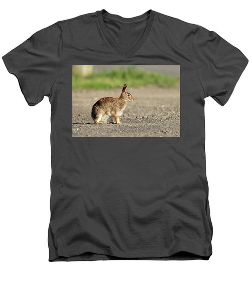 Cottontail Rabbit Stony Brook New York Men's V-Neck T-Shirt