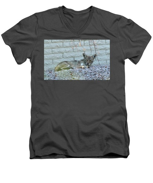Men's V-Neck T-Shirt featuring the photograph Coyote by Anne Rodkin