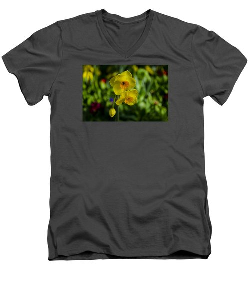 Daffodils Men's V-Neck T-Shirt