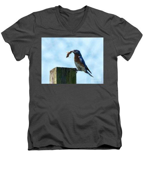Eastern Bluebird Men's V-Neck T-Shirt