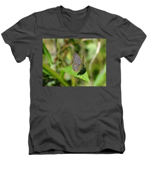 Eastern Tailed Blue Butterfly Men's V-Neck T-Shirt