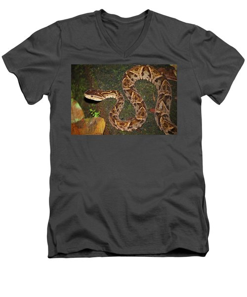 Fer-de-lance, Bothrops Asper Men's V-Neck T-Shirt