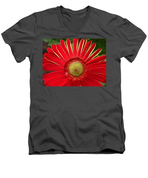Gerbera Daisy Men's V-Neck T-Shirt