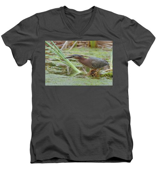 Men's V-Neck T-Shirt featuring the photograph Green Heron by Doug Herr