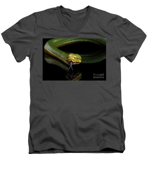 Green Tree Python. Morelia Viridis. Isolated Black Background Men's V-Neck T-Shirt