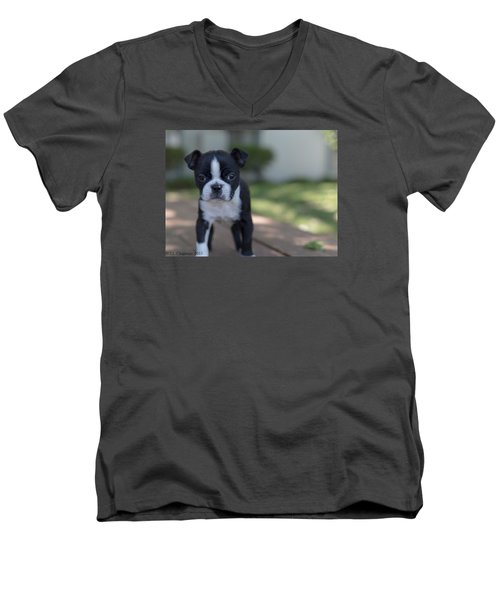 Men's V-Neck T-Shirt featuring the photograph Harley As A Puppy by Lora Lee Chapman