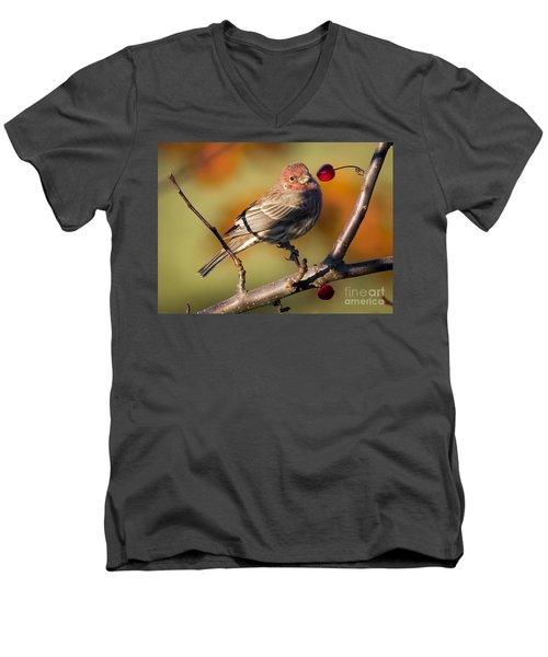 House Finch Men's V-Neck T-Shirt