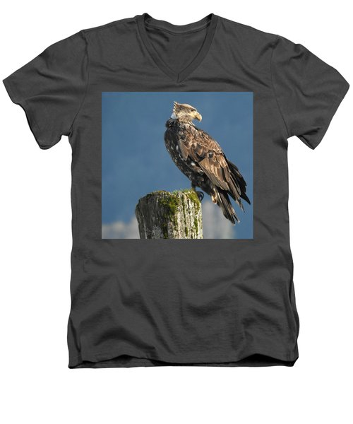 Immature Bald Eagle Men's V-Neck T-Shirt by Brian Chase