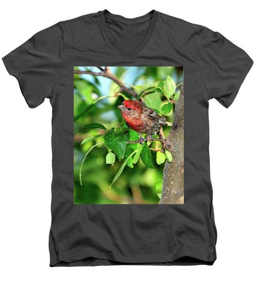 Inquisitive Men's V-Neck T-Shirt